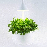 Indoor growing system detects plant type, suggests settings